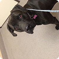 Adopt A Pet :: Wes Jr - Fowler, CA