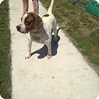 Adopt A Pet :: Hendrix - Wauchula, FL