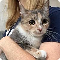 Adopt A Pet :: Merle - Centerville, GA