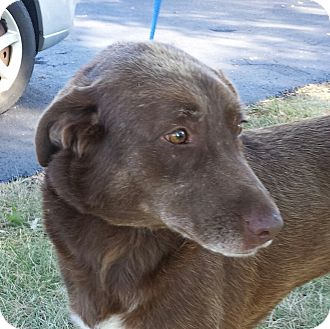 Labrador Retriever Mix Dog for adoption in LaGrange, Kentucky - Ginger