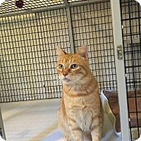 Adopt A Pet :: Oscar - Victor, NY
