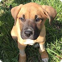 Adopt A Pet :: Caraline - CUMMING, GA