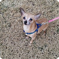 Adopt A Pet :: Benny - Manassas, VA