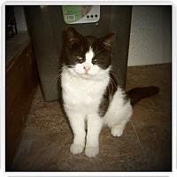 Adopt A Pet :: ALLIE - Medford, WI