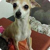 Adopt A Pet :: Susie - Island Heights, NJ