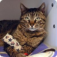 Adopt A Pet :: Ridder - Lincoln, NE