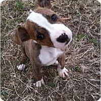 Adopt A Pet :: Mic Jagger - Arlington, TX