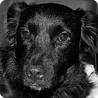 Adopt A Pet :: Nina (Penny) - Hastings, NY