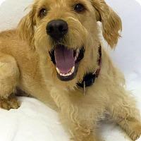 Adopt A Pet :: Deeds - Mission Viejo, CA