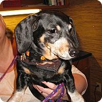 Adopt A Pet :: Katie - Salem, OR