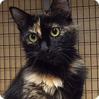 Adopt A Pet :: Shiva - Grants Pass, OR