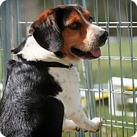 Adopt A Pet :: Romeo - Barnesville, GA