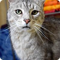 Adopt A Pet :: Harry - Richand, NY