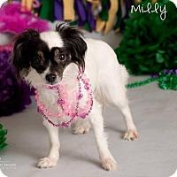 Adopt A Pet :: Miss Milly - Surprise, AZ
