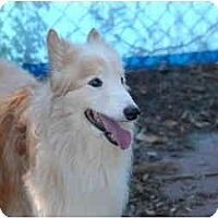 Adopt A Pet :: Buddy - Ft. Myers, FL