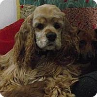 Adopt A Pet :: LI'L BOY - Tacoma, WA
