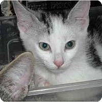 Adopt A Pet :: Star - Riverside, RI