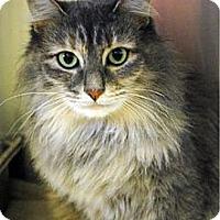Adopt A Pet :: Halle - East Hanover, NJ