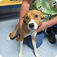 Adopt A Pet :: Angel(ADOPTED!) - Chicago, IL