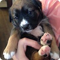 Adopt A Pet :: Mink, aka Rocky - Houston, TX