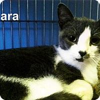 Adopt A Pet :: Sara - Medway, MA