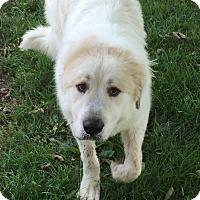 Adopt A Pet :: Duke ADOPTION PENDING - Bloomington, IL
