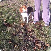 Adopt A Pet :: Wally - Shelter Island, NY