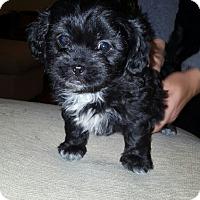 Adopt A Pet :: Dawson - Algonquin, IL