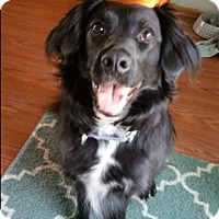 Adopt A Pet :: Penny - Midwest (WI, IL, MN), WI