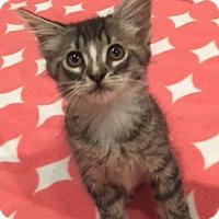Adopt A Pet :: Benny - Irvine, CA