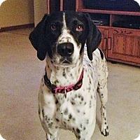 Adopt A Pet :: Annie  COURTESY POST - Chesterfield, MI