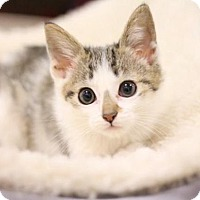Adopt A Pet :: Lilly - Sacramento, CA