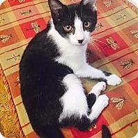 Adopt A Pet :: Po - Ocala, FL
