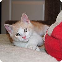 Adopt A Pet :: Thomas - Palmdale, CA