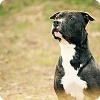 Adopt A Pet :: Runner - Baltimore, MD