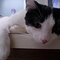 Adopt A Pet :: Zoren - St. Cloud, FL