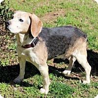 Adopt A Pet :: GRANDPA COOPER - richmond, VA