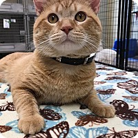 Adopt A Pet :: Spencer - Maryville, MO