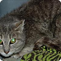 Adopt A Pet :: Cloudy - Duluth, MN