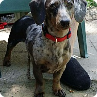 Adopt A Pet :: POE - Lubbock, TX
