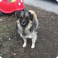 Adopt A Pet :: Boy - Chewelah, WA