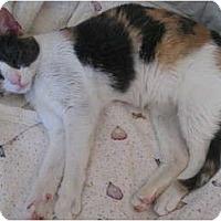 Adopt A Pet :: Maybel - Morgan Hill, CA