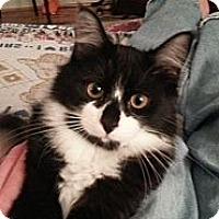Adopt A Pet :: Shack - Arlington, VA