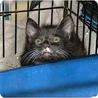Adopt A Pet :: Stan - Winter Haven, FL