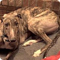 Adopt A Pet :: WW's Fancy Work - Knoxville, TN