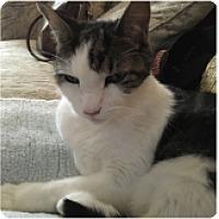 Adopt A Pet :: Pip - Novato, CA