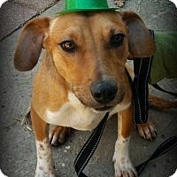 Adopt A Pet :: Bingo - Sparta, NJ