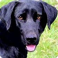 Adopt A Pet :: JASMINE(ADORES HER FAMILY!!) - Wakefield, RI