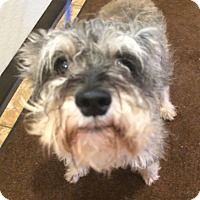 Adopt A Pet :: Wallace - Oak Ridge, NJ