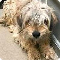 Adopt A Pet :: Beta - Boulder, CO